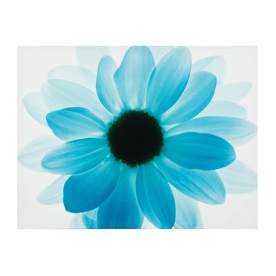 All Home Floral Graphic Art on Canvas