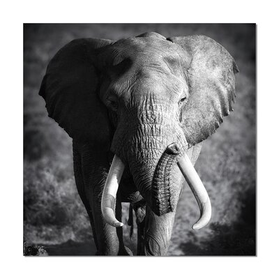 Home Etc YoungOnes Elephant Photographic Print