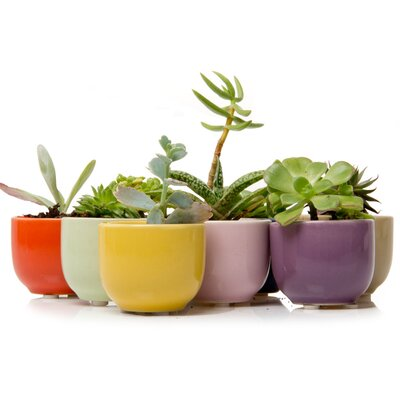 House Additions Succulent Mix Vase