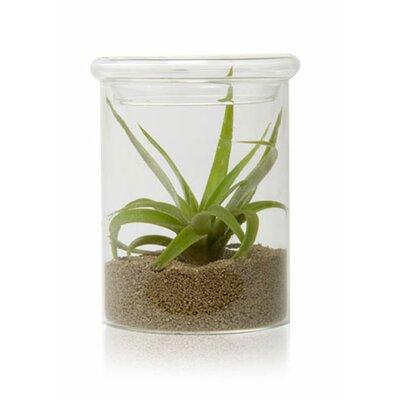 House Additions Terrarium Bowl Vase