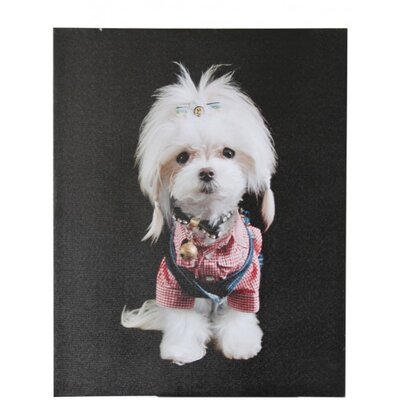 House Additions Doggy Parton Photographic Print on Canvas