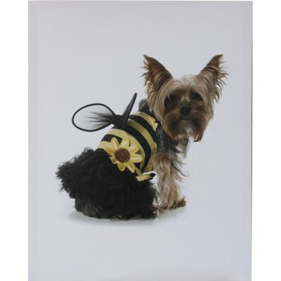 House Additions Doggy Bumble Bee Photographic Print on Canvas