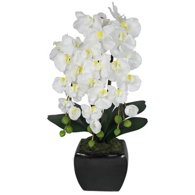 House Additions Orchid Accent