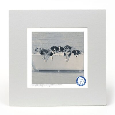 House Additions Battersea Dogs and Cats Home Bath Time Photographic Print