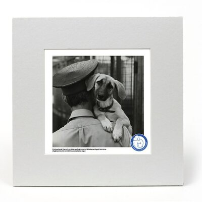 House Additions Battersea Dogs and Cats Home A Helping Hand Photographic Print