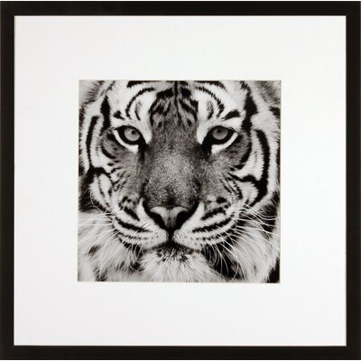 House Additions Tiger Framed Photographic Print