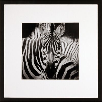 House Additions Zebra Framed Photographic Print