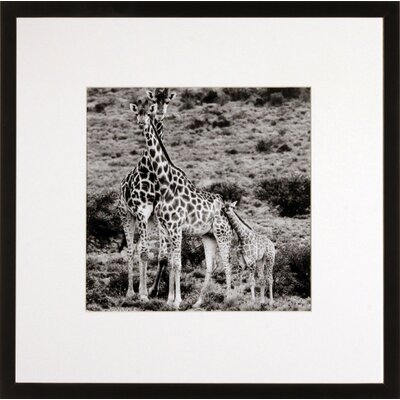 House Additions Giraffes Framed Photographic Print