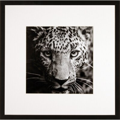 House Additions Wild Cat Framed Photographic Print