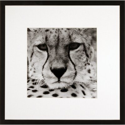 House Additions Cheetah Framed Photographic Print