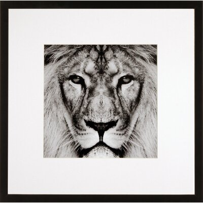 House Additions Lion Framed Photographic Print