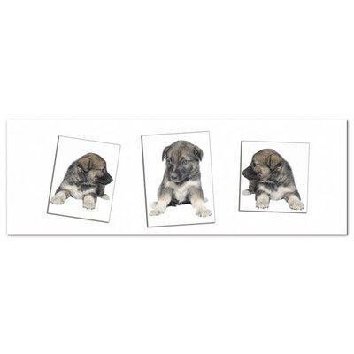 Graz Design Acrylglasbild Hundewelpen