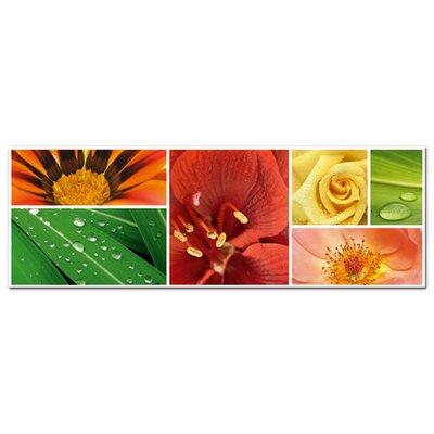 Graz Design Acrylglasbild Blumen, Blätter, Rosen, Tropfen