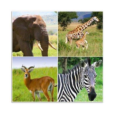 Graz Design Wandsticker Afrika, Giraffe, Elefant, Zebra