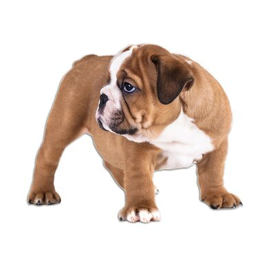 Graz Design Wandsticker englische Bulldogge