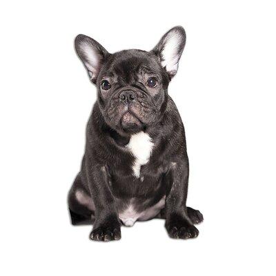 Graz Design Wandsticker Bulldogge