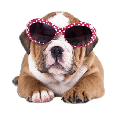 Graz Design Wandsticker Sonnebrille, Bulldogge