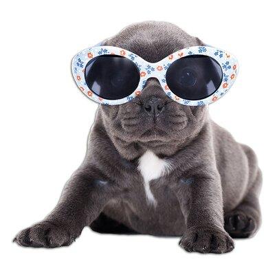 Graz Design Wandsticker Sonnenbrille Hund