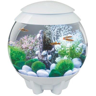 """Halo Aquarium Bowl Color: White, Size: 18.9"""" H x 16.14"""" W x 16.14"""" D"""