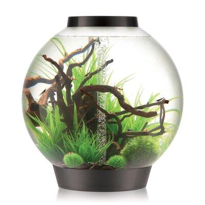 """4 Gallon Classic Aquarium Bowl Color: Black, Size: 16.5"""" H x 15.75"""" W x 15.75"""" D"""