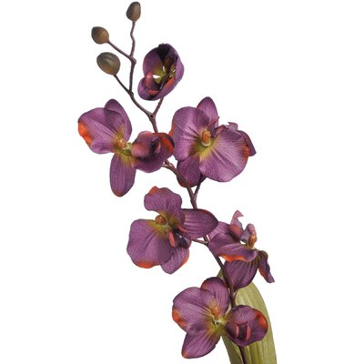 Hill Interiors Orchid Plant