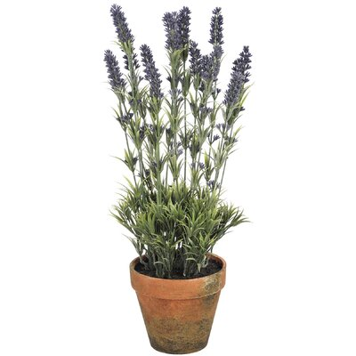 Hill Interiors Large Lavender in Pot
