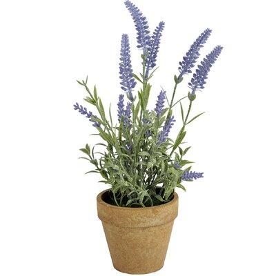 Hill Interiors Lavender in Pot