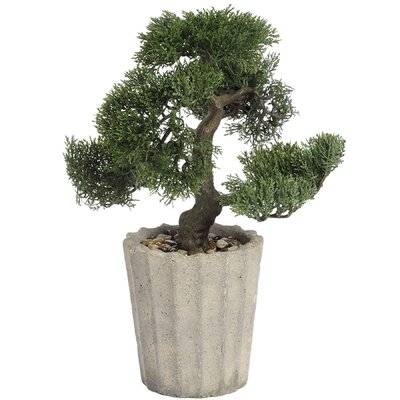 Hill Interiors Bonsai Tree in Pot