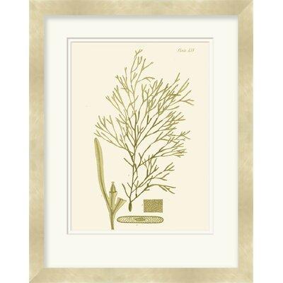 Surya Dramatic Seaweed II by Vision Studio Framed Graphic Art