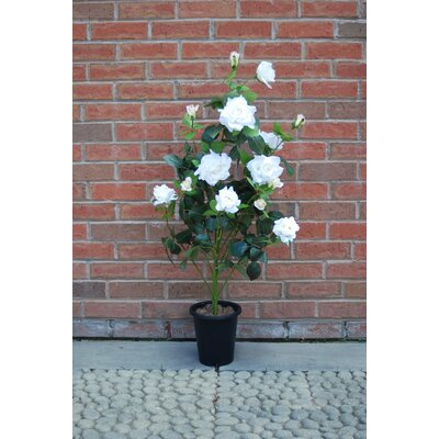 Ascalon Damask Rose Pot