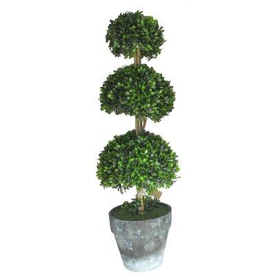 Ascalon Three Ball Box Round Topiary in Pot
