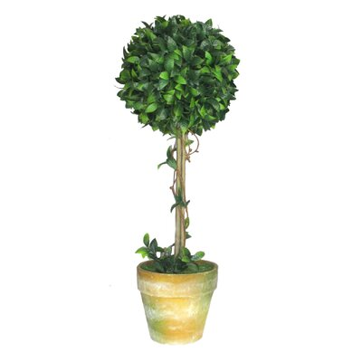 Ascalon Bay Ball Round Topiary in Pot