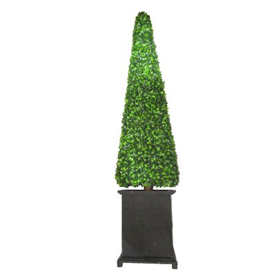 Ascalon Box Round Tapered Topiary in Planter