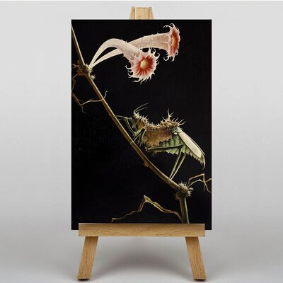 Big Box Art Insect and Flower by Franz Sedlacek Graphic Art on Canvas