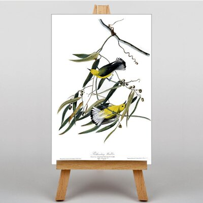 Big Box Art Prothonotary Warbler by John James Graphic Art on Canvas