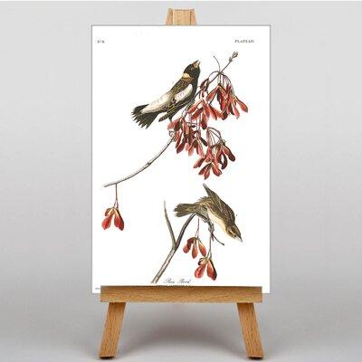 Big Box Art Rice Bird by John James Graphic Art on Canvas