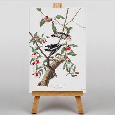 Big Box Art Downy Woodpecker by John James Art Print on Canvas