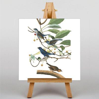Big Box Art Audubon Indigo Bird by John James Art Print on Canvas