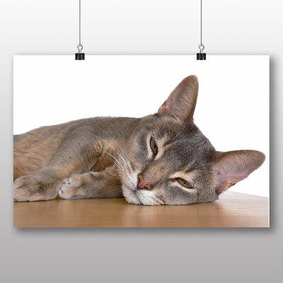 Big Box Art Abyssinian Cat Photographic Print on Canvas