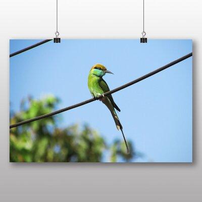 Big Box Art Bird Photographic Print Wrapped on Canvas