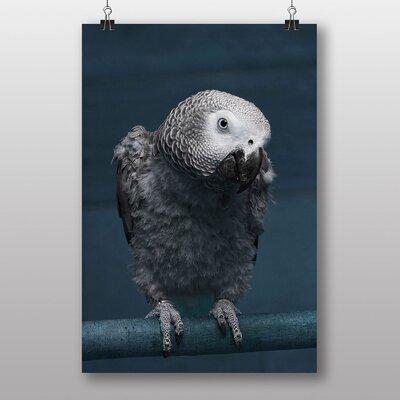Big Box Art African Grey Parrot Photographic Print