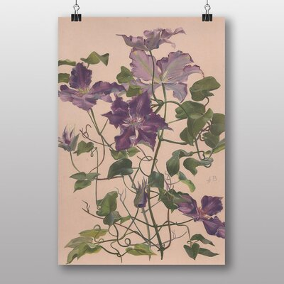 Big Box Art 'Large Clematis Flower' by Alice Bailly Art Print