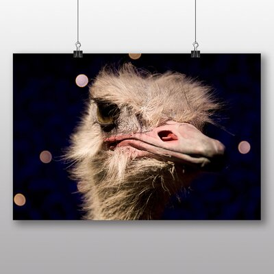 Big Box Art 'An Ostrich' Photographic Print