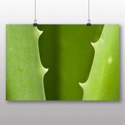 Big Box Art Aloe Vera Plant Photographic Print