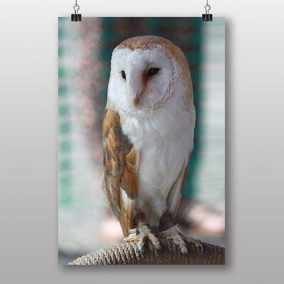 Big Box Art Barn Owl Photographic Print