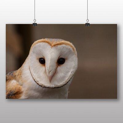Big Box Art Barn Owl No.2 Photographic Print Wrapped on Canvas