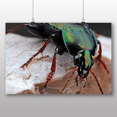 Big Box Art Beetle Photographic Print Wrapped on Canvas