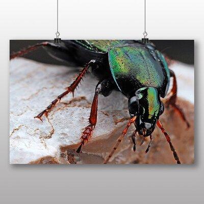 Big Box Art Beetle Photographic Print