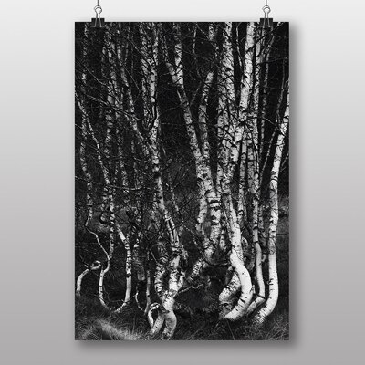 Big Box Art Birch Tree Forest No.2 Photographic Print
