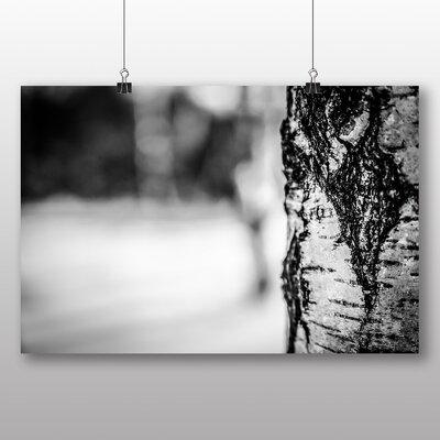 Big Box Art Birch Tree No.5 Photographic Print Wrapped on Canvas